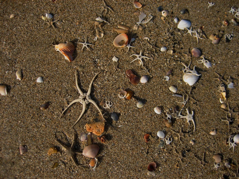 kleine Schätze vom Meer
