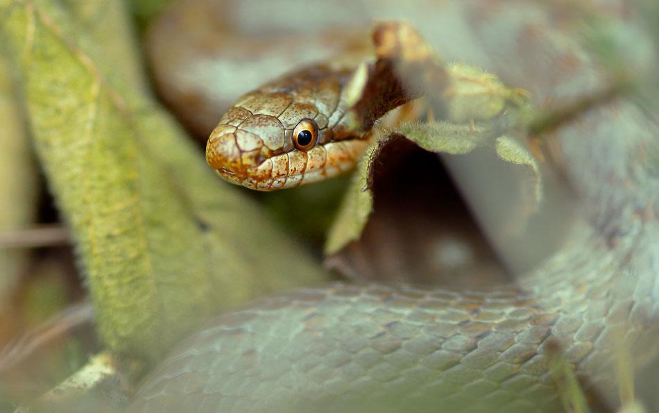 Kleine Schlange