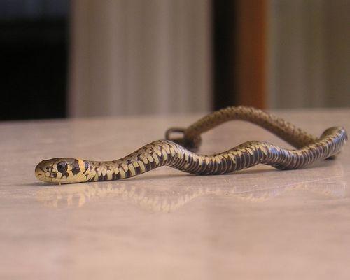 Kleine Schlange ganz groß