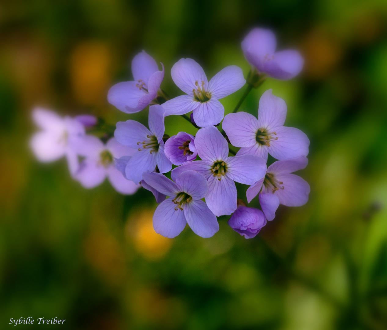 Kleine Schönheiten