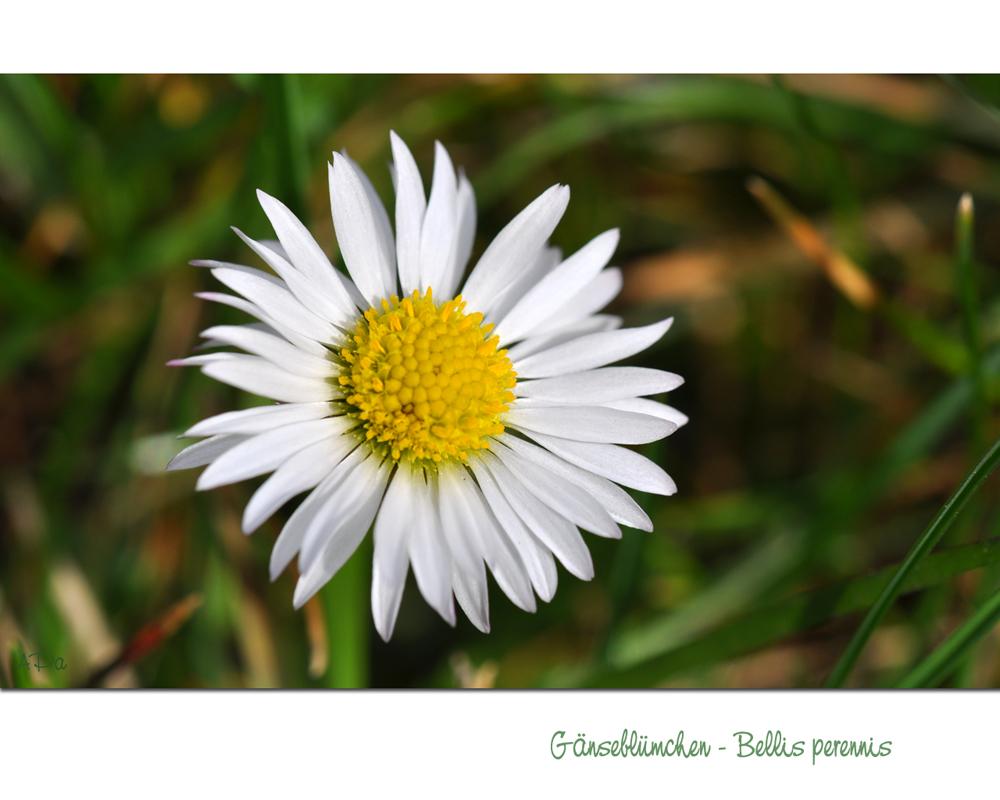 Kleine Sonne in weiß