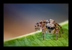 Kleine Spinne