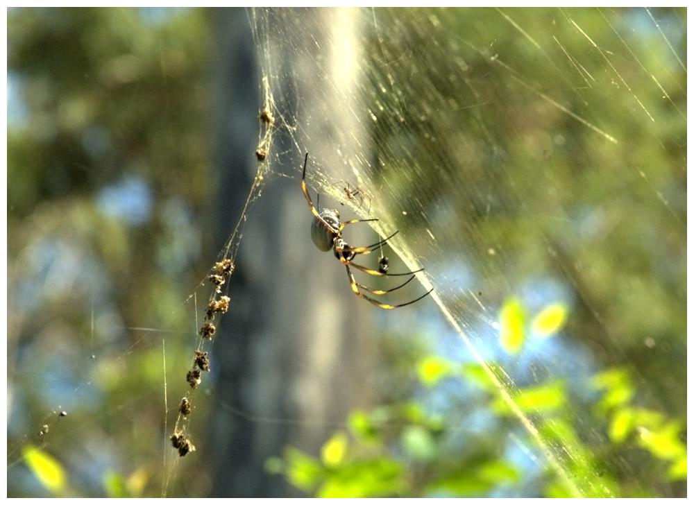 Kleine Spinne, große Spinne