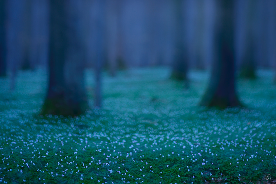 Kleine Sterne in der Nacht ...