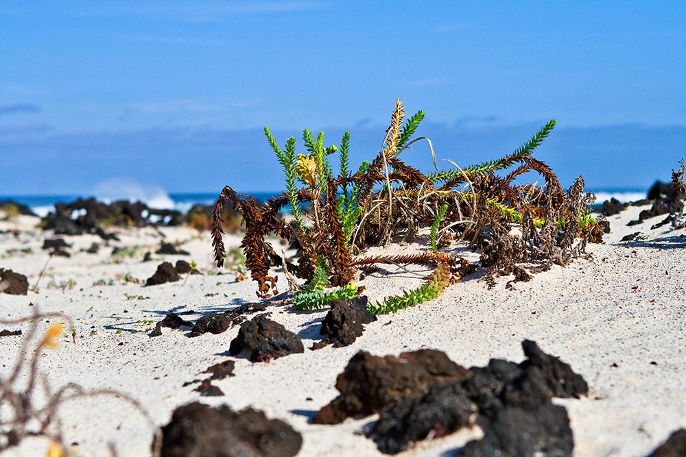 Kleine Strandwelten