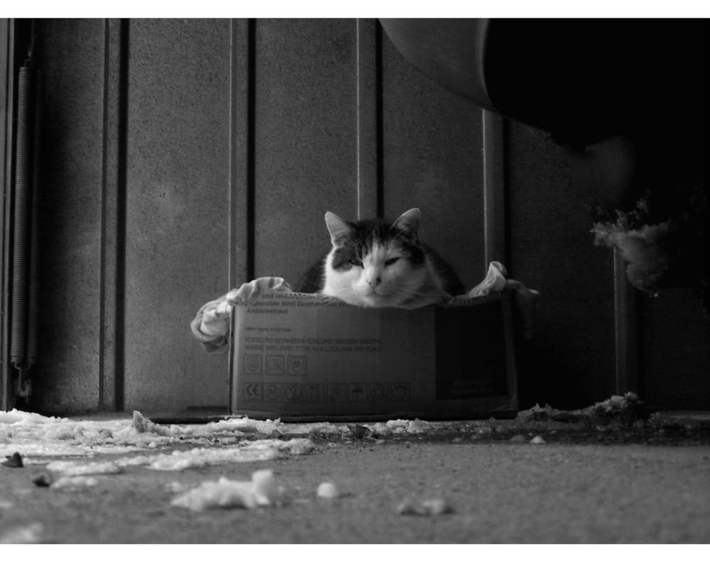 Kleine Straßenkatzen........