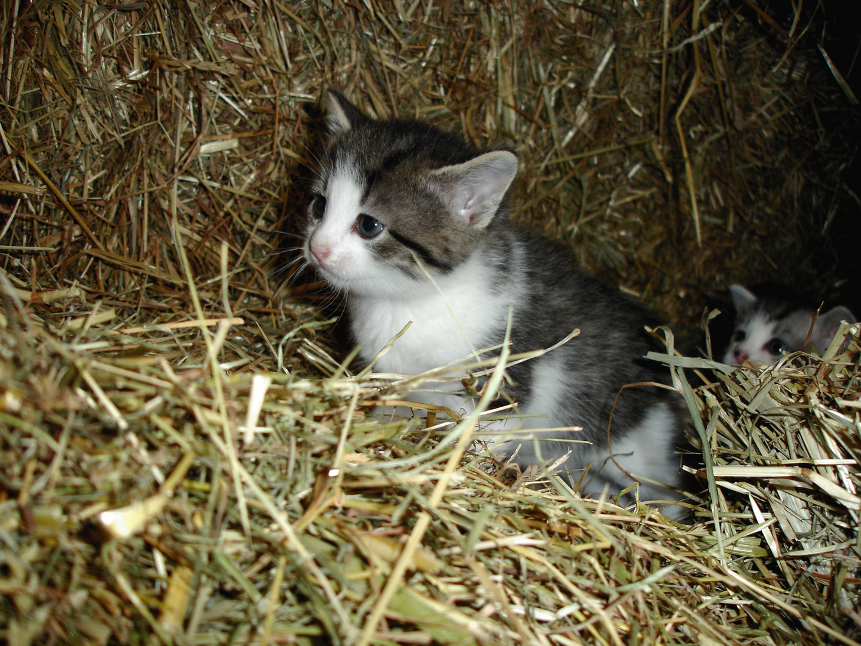 Kleine Strohkatzen