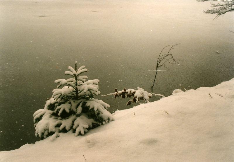 kleine Tanne im Schnee
