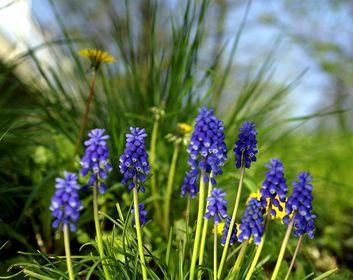 Blüten- & Kleinpflanzen