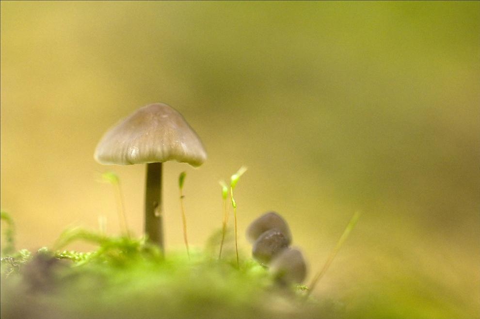 kleine Waldgeschichten