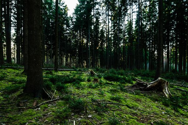 Kleine Waldlichtung