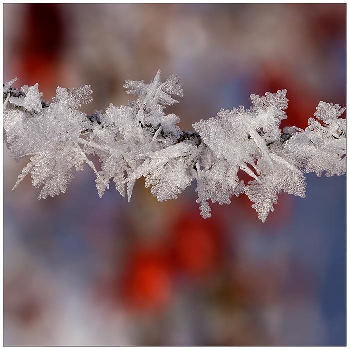 kleine Winter-Wunder