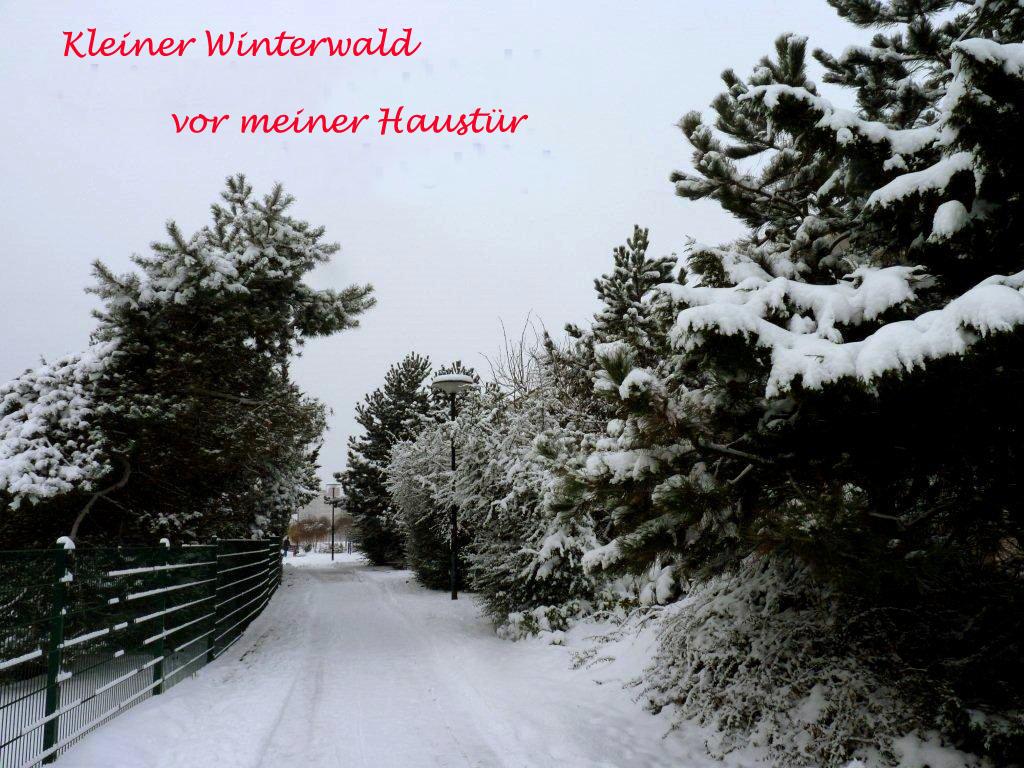 Kleine Winterwald