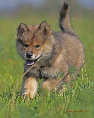...kleine Wölfin...