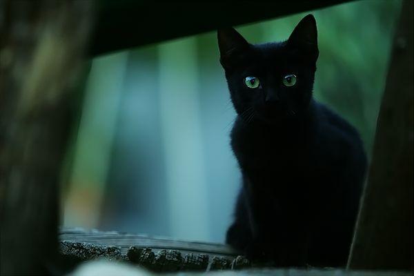 kleine::ängstliche::schwarze::Katze