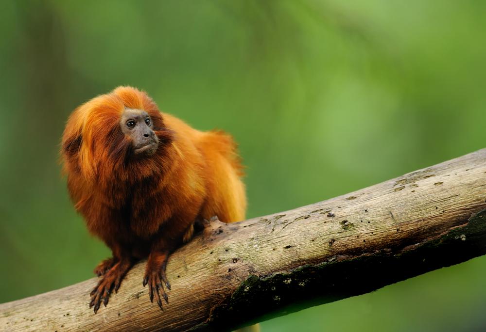 Kleiner Affe...
