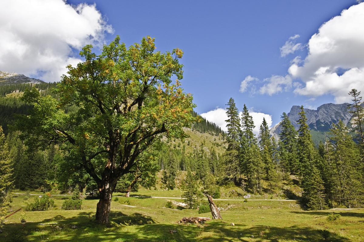 Kleiner Ahornboden - Karwendelgebirge
