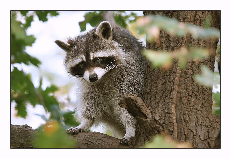 Kleiner Bandit