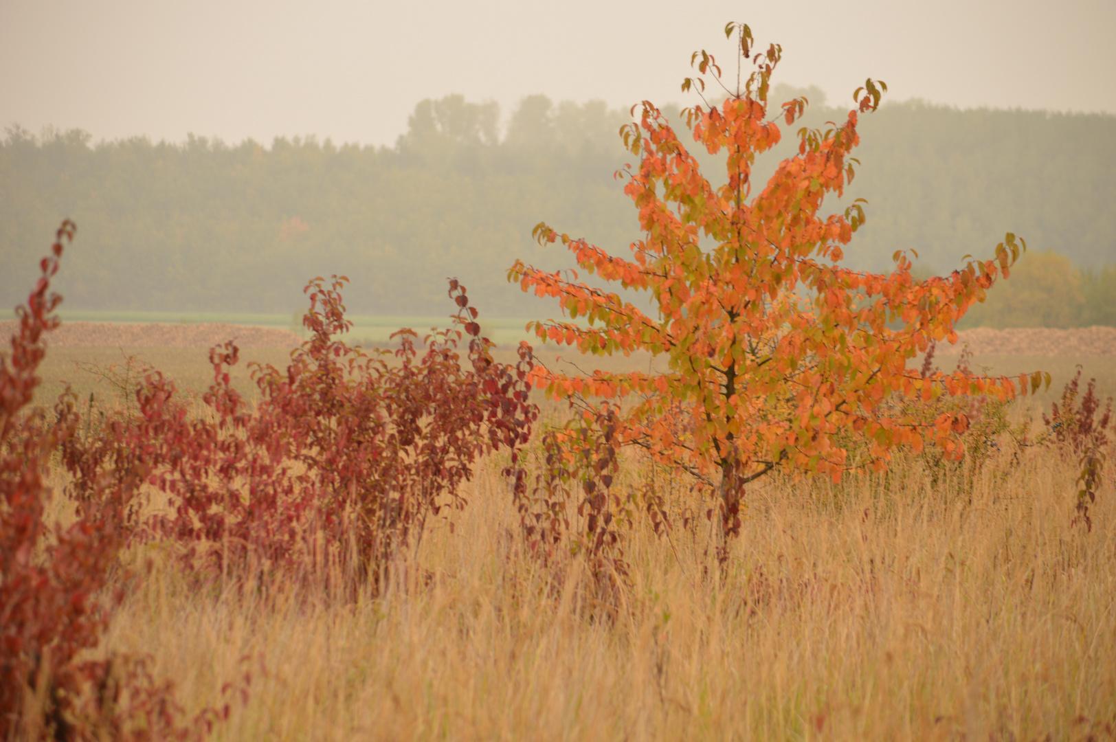 Kleiner Baum im Herbst Dunst