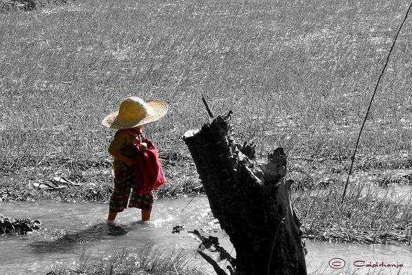 Kleiner Birmanese