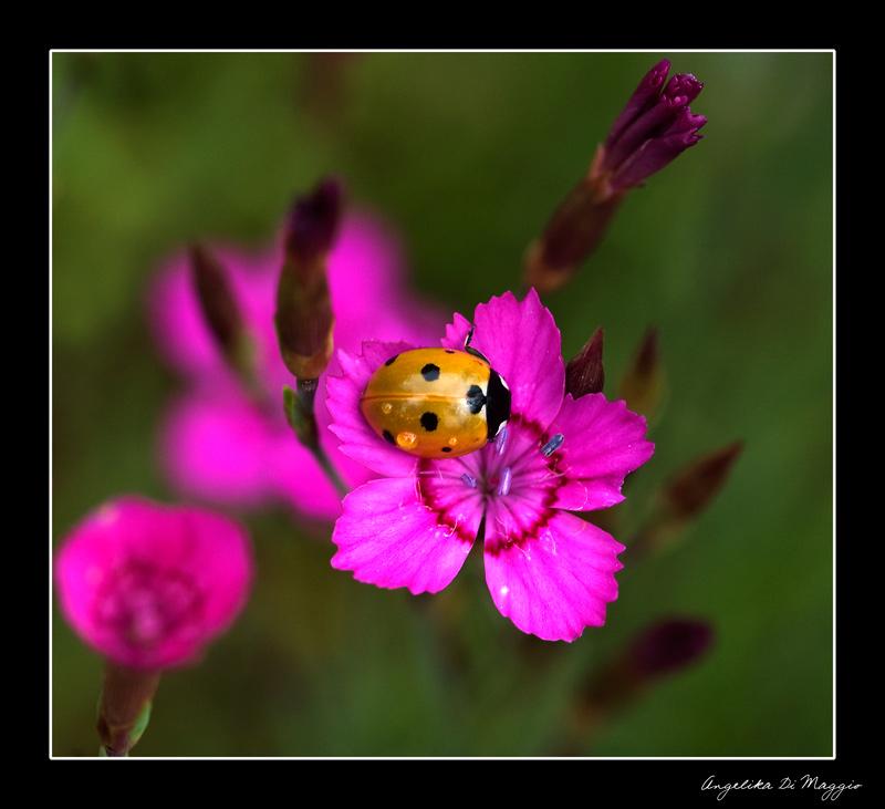 Kleiner Blütenfreund
