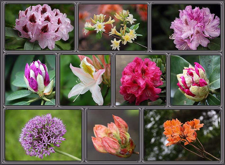 kleiner Blütenmix zu Pfingsten