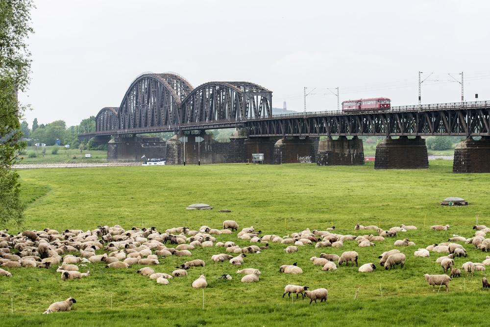Kleiner Brummer auf großer Brücke