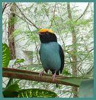 Kleiner bunter Vogel