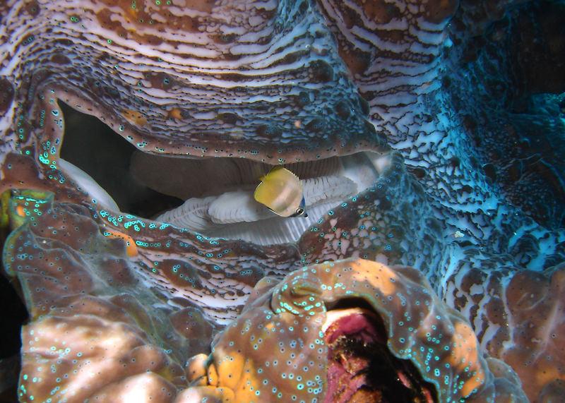 Kleiner Fisch ganz mutig ;-))