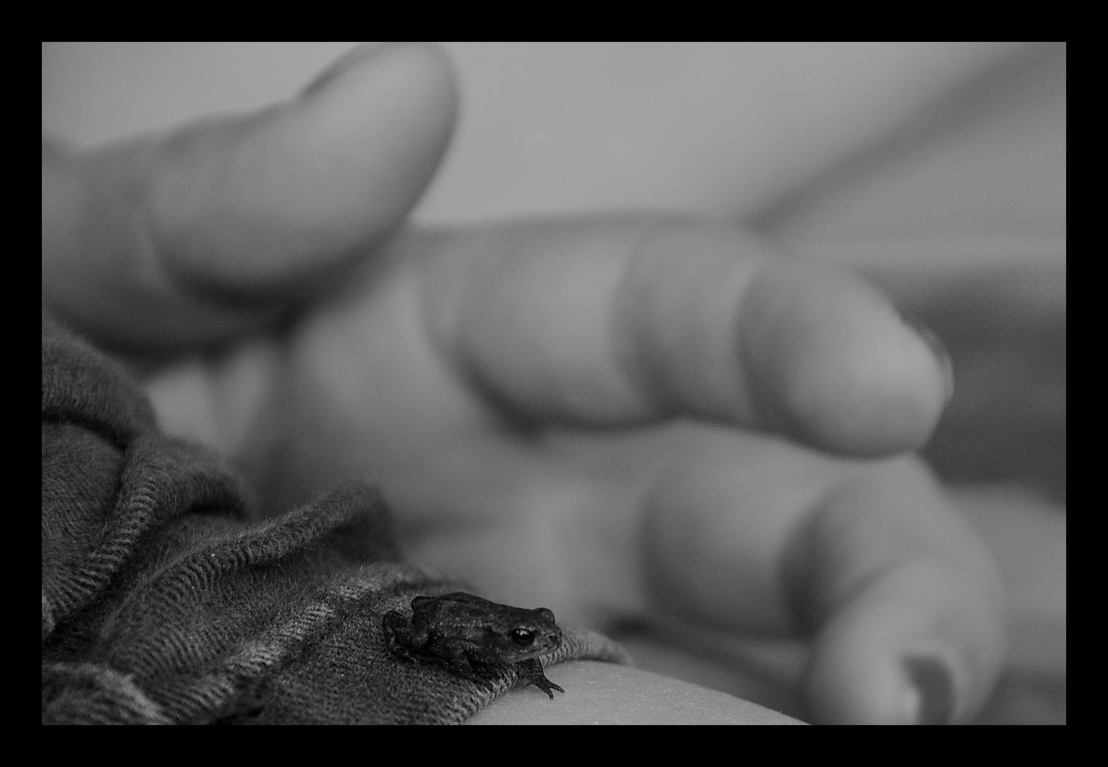 ... kleiner Frosch auf großer Reise