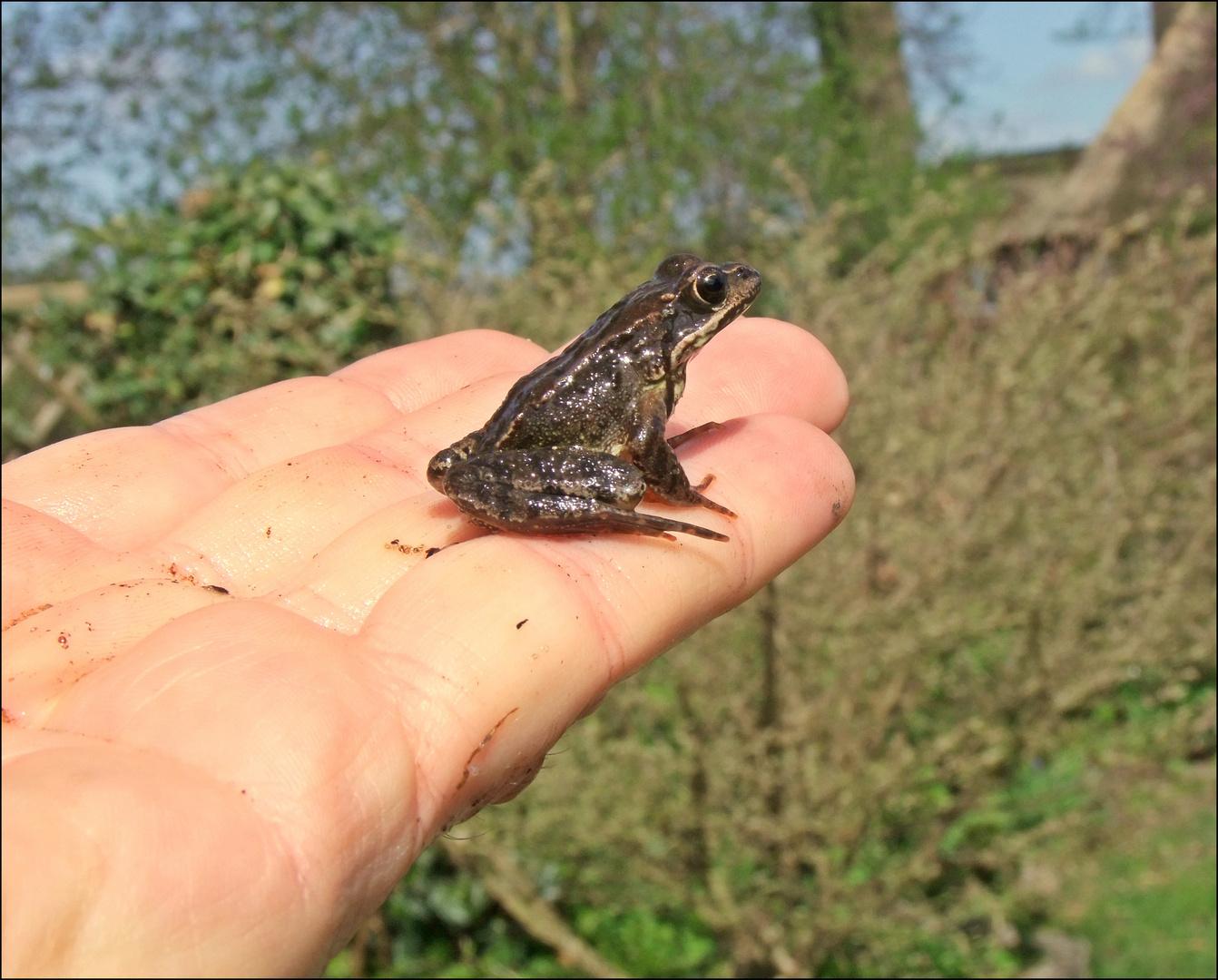 kleiner Frosch...
