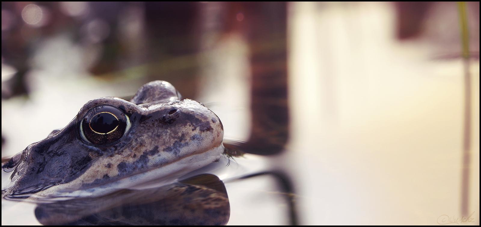 kleiner Froschkönig