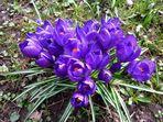 kleiner Frühling in Aschaffenburg Nr. 2