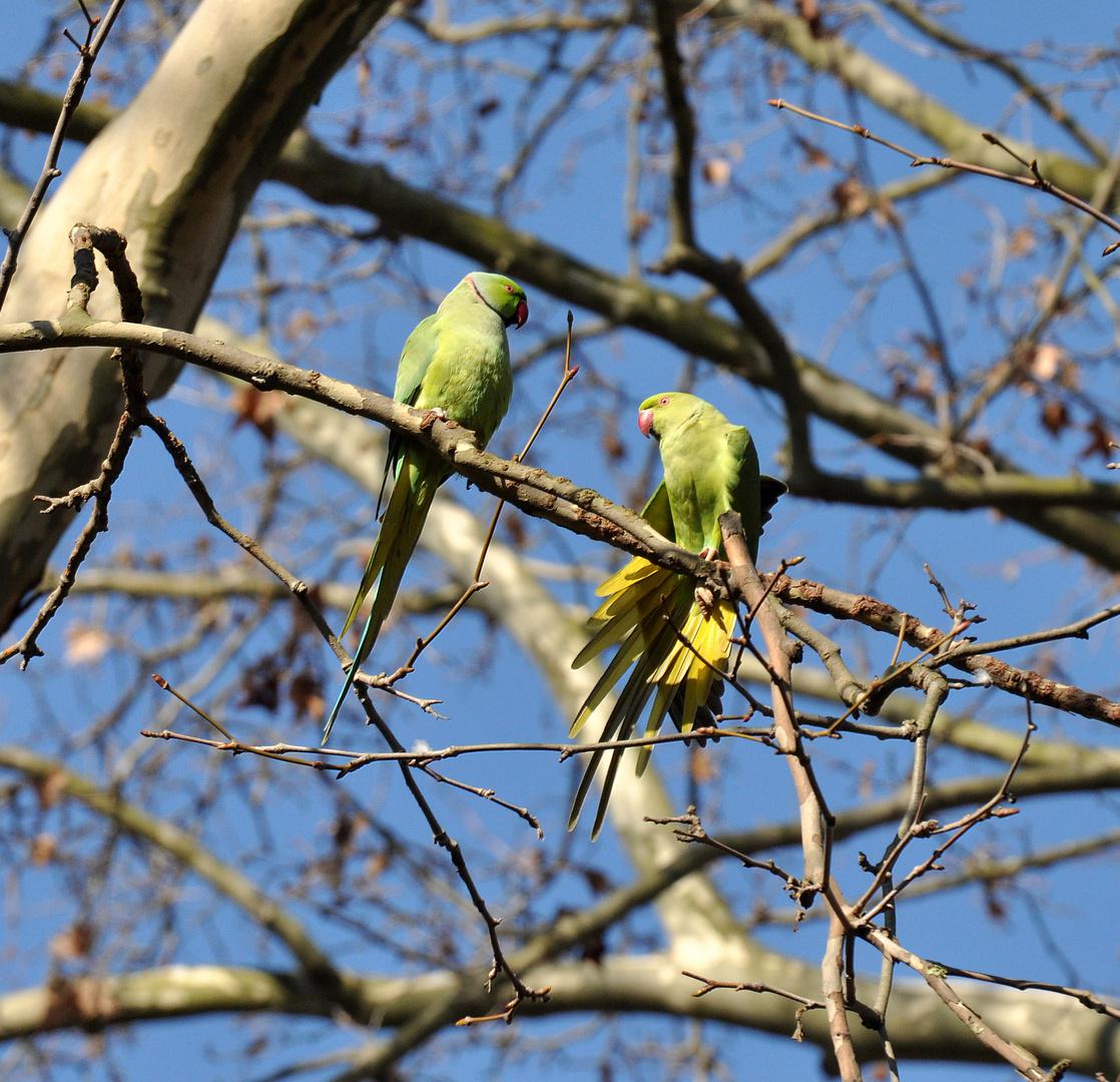 Kleiner Frühlings-Flirt