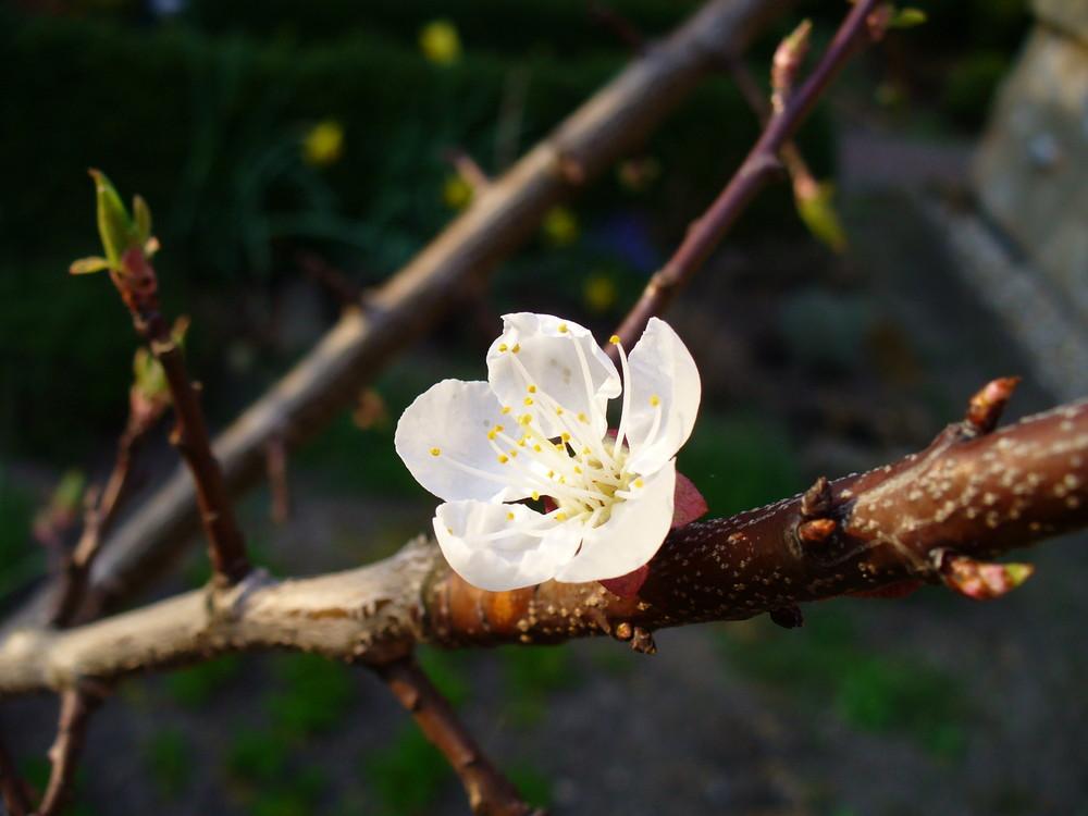 Kleiner Frühlingsbote