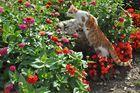 kleiner Fuchs 02: Schmetterlingsjäger