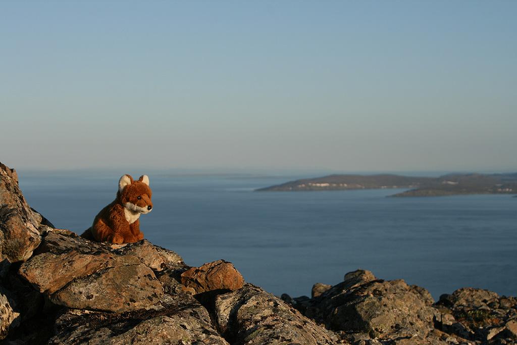 Kleiner Fuchs auf großer Reise