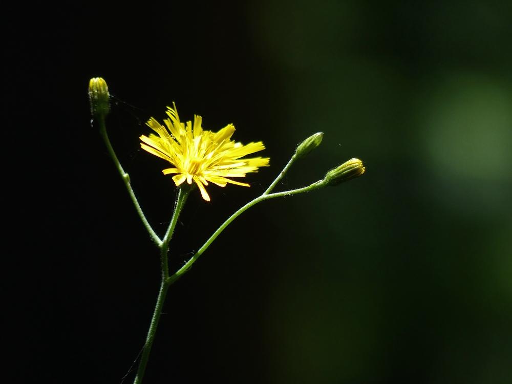 Kleiner gelber Waldbewohner