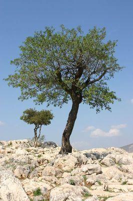 kleiner großer Baum