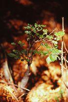 Kleiner, großer Baum