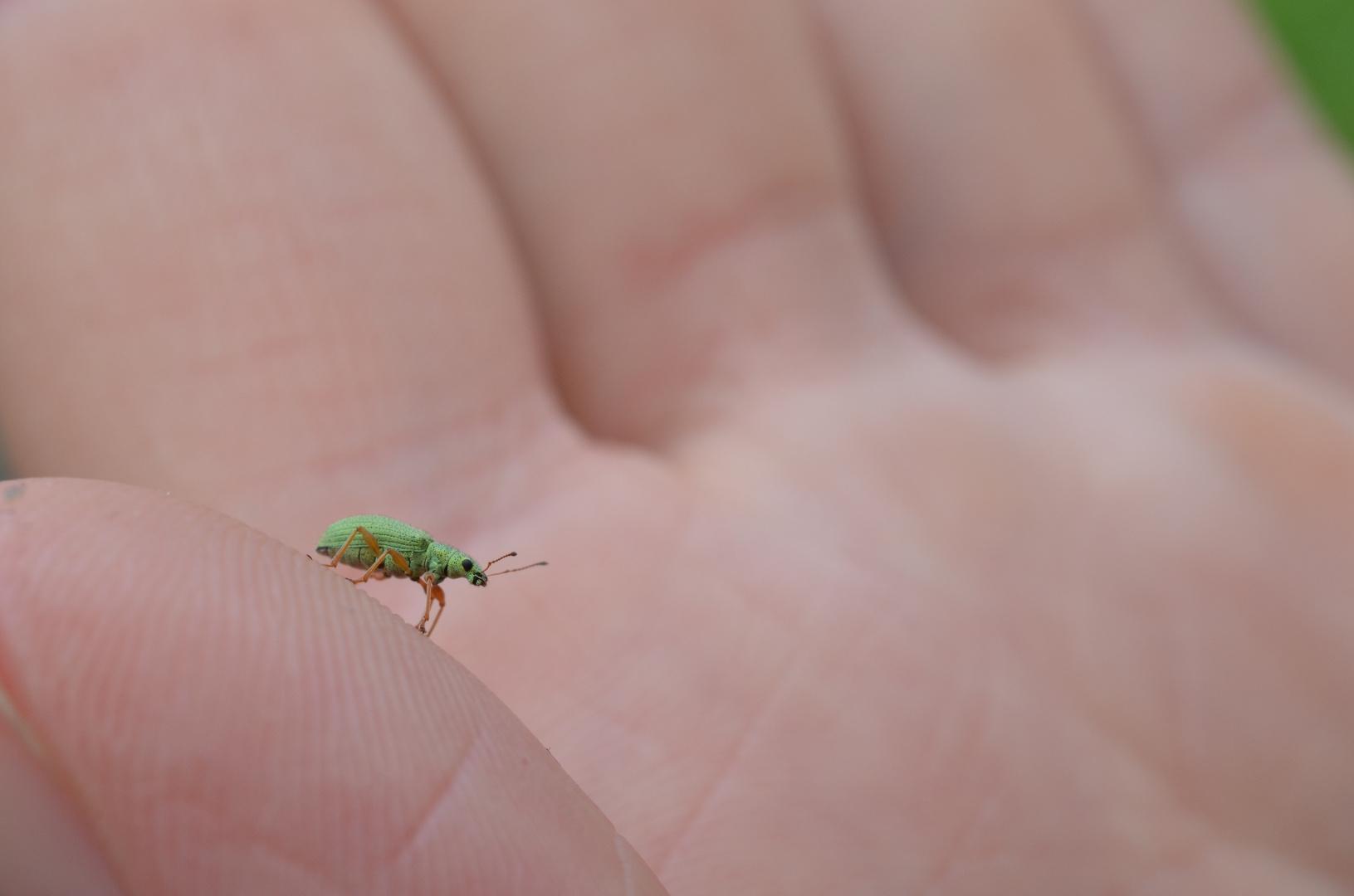 Kleiner grüner Freund