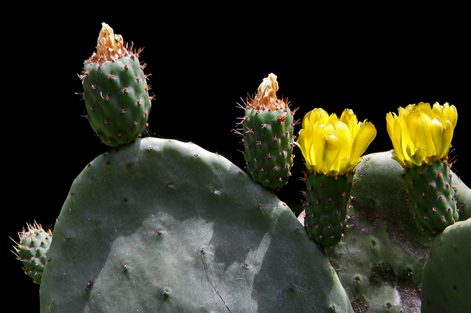 ...kleiner grüner Kaktus..,