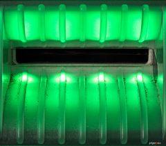 Kleiner grüner Steinbeißer