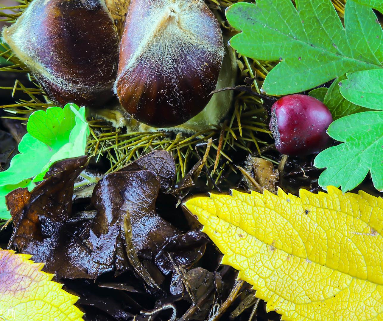 Kleiner Herbstauschnitt....