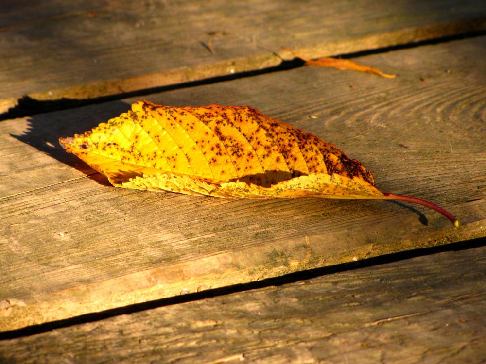 Kleiner Herbstbote