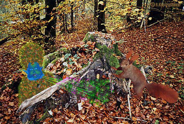 Kleiner Herbstgeist und neugieriges Eichhörnchen.