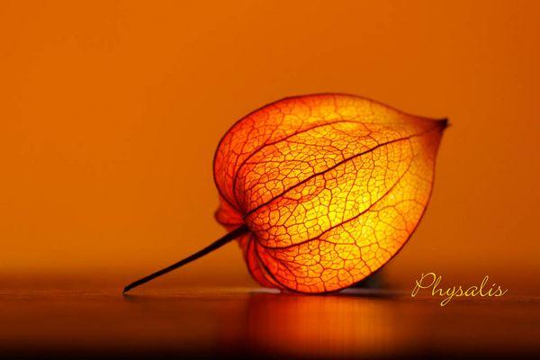 Kleiner Herbstgruß zum Wochenende