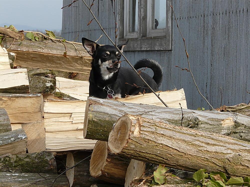 kleiner hund beim klettern