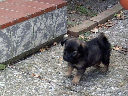 Kleiner Hund ganz groß !!!