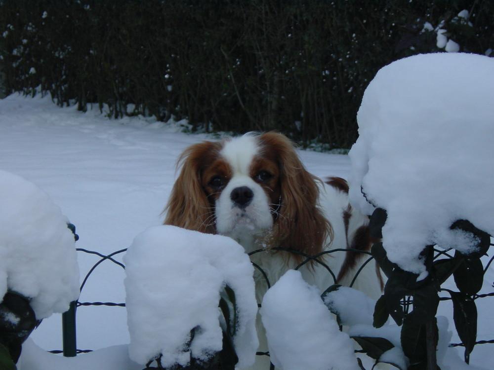 Kleiner Hund ganz neugierig.